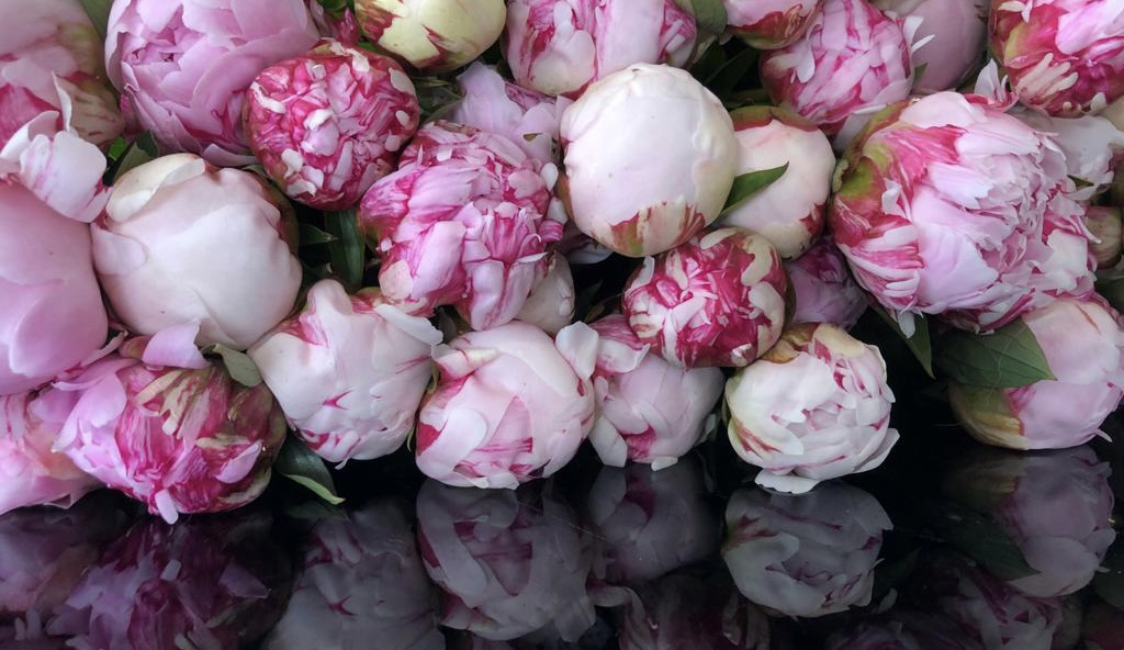 Venez découvrir les fleurs de saisons directement à la boutique Choufleurs au Perreux sur Marne